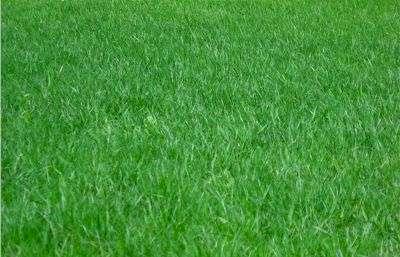 Penrith Lawn Mowing Garden Services