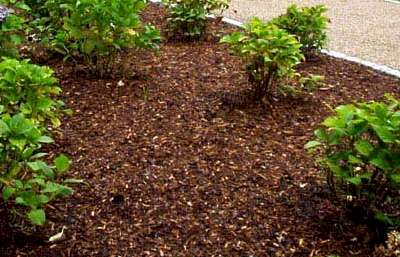 Penrith Lawn Mowing Mulching Services