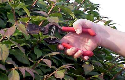 Penrith Lawn Mowing Pruning Services